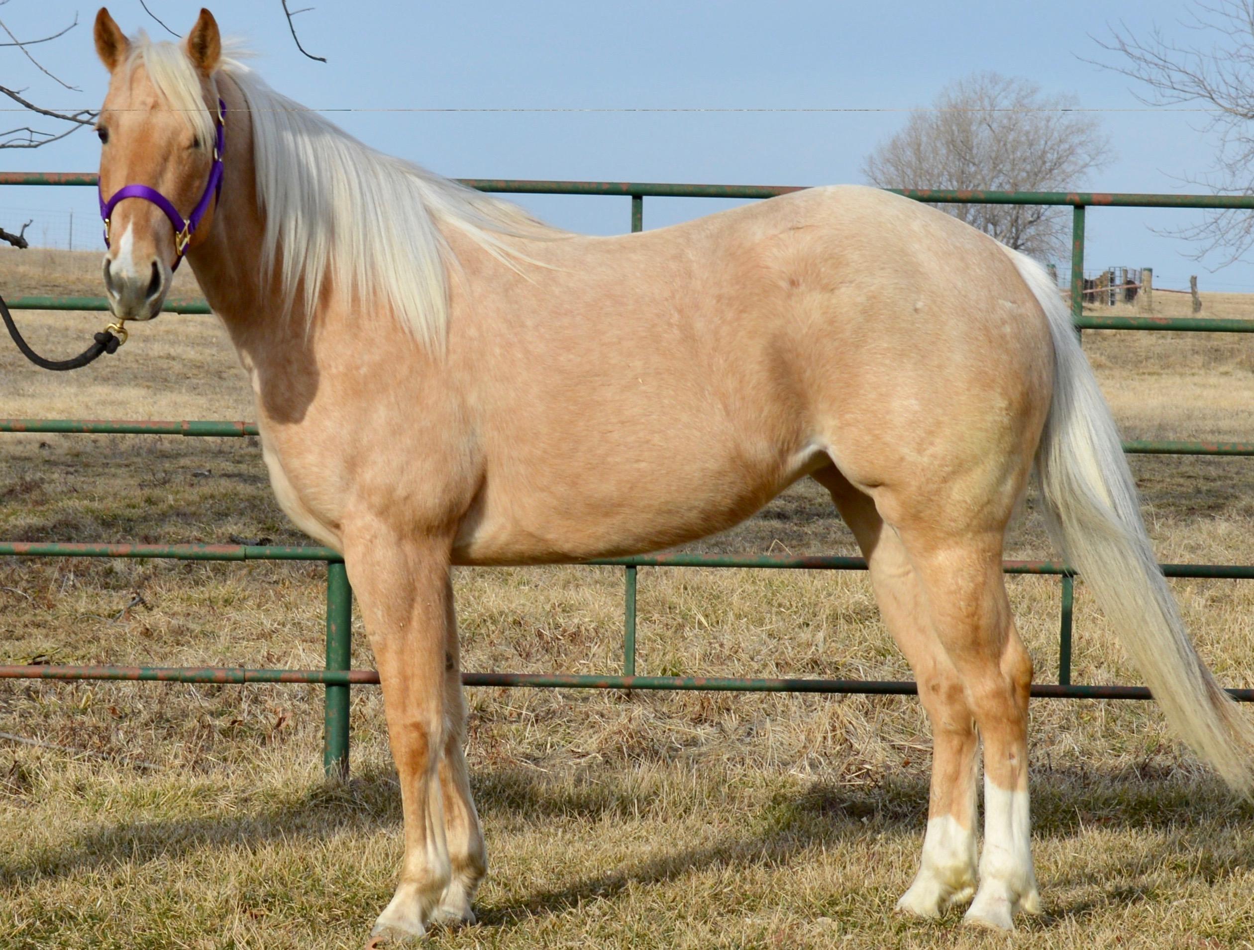 HEART OF THE CARTEL - Canadian River Quarter Horses